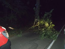 18. 8. 2016  Technická pomoc - spadlá větev lípy na cestě k bažantnici - Darkovice, les Štípky